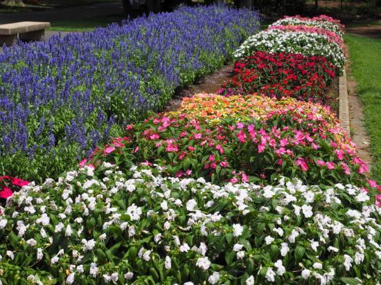 Kanagawa Prefectural Ofuna Botanical Garden : 綺麗ですね。