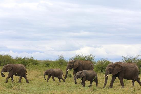 Sekenani Camp: A Family of Elephants