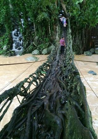 West Sumatra, Endonezya: Jembatan Akar dengan jalinan alami akar-akar beringin yang sudah ratusan tahun