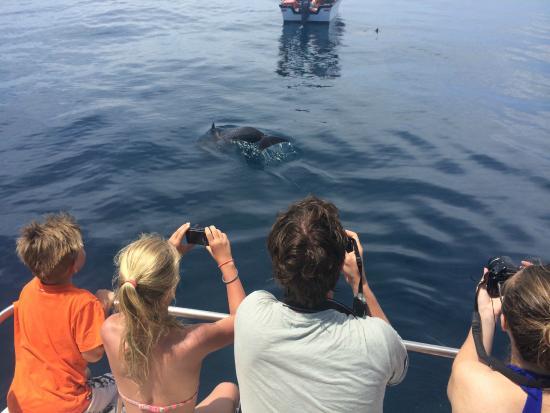 Samara Adventure Company: Dolphin Safai & Snorkel