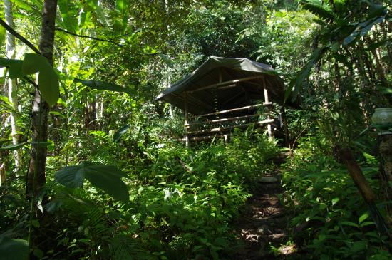 "Lupa Masa Rainforest Camp : our"" house"""