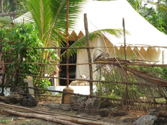 Five Five Restaurant and Guest Tents: tents