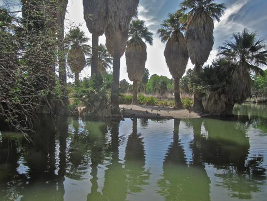 Agua Caliente Park: Exciting Serenity