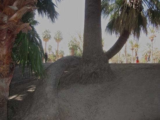 Agua Caliente Park: Tropic like