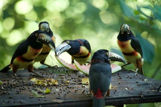Mystic River Resort: breakfast companions