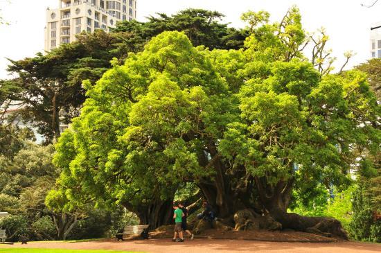 Albert-Park: Буйство зелени