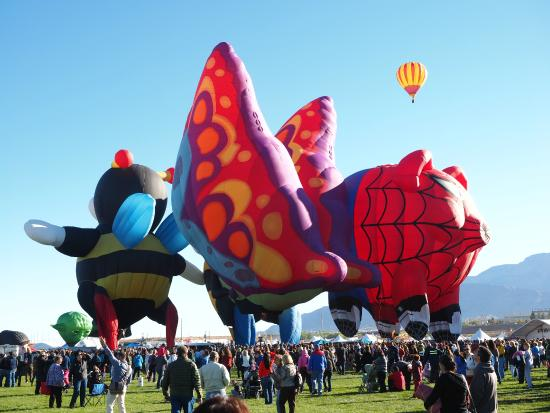 bumble bee butterfly and spider pig balloons picture of balloon