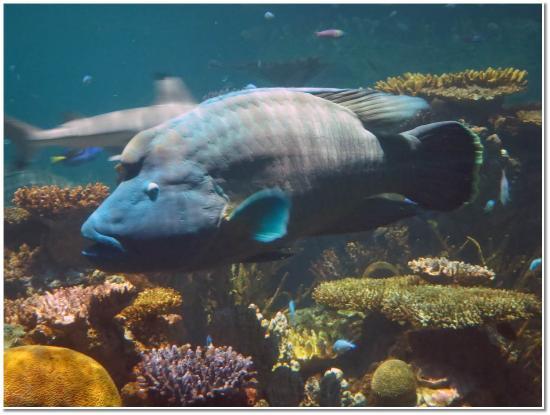 Humphead Wrasse Picture Of National Aquarium Baltimore