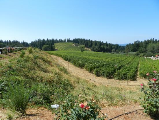 Crystal Basin Cellars: El Dorado Wine Region Vineyard