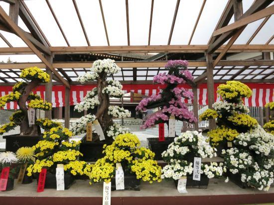 Naritasan Park: Decorative Flowers