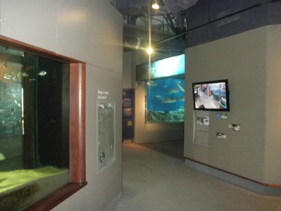 Aquarium Picture Of South Carolina Aquarium Charleston