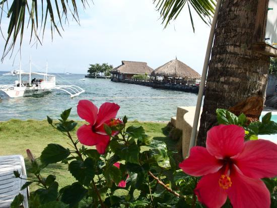 Anemone Resort and Tours, Cebu : sea side