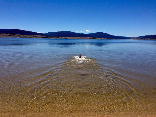 Lake Jindabyne: Dog friendly