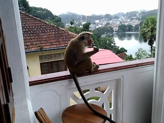 Nathashiya Holiday Inn : monkey family visited us
