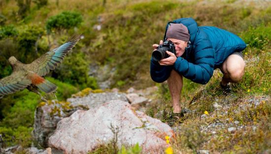 Wildlight Safaris Aotearoa - Day Tours
