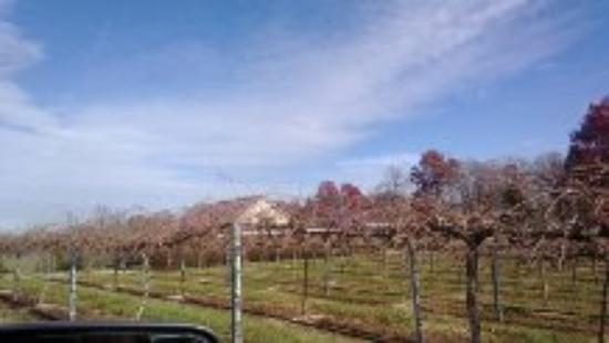 WoodMill Winery: Wood Mill Winery Property