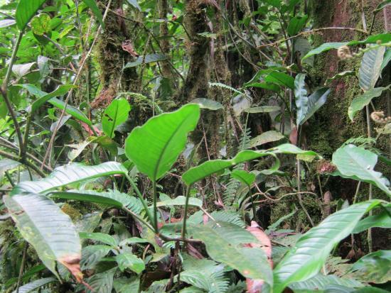 Rainforest Adventures: Rainforest floor