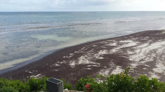 Swahili Beach Resort: Zwart strand met zeewier