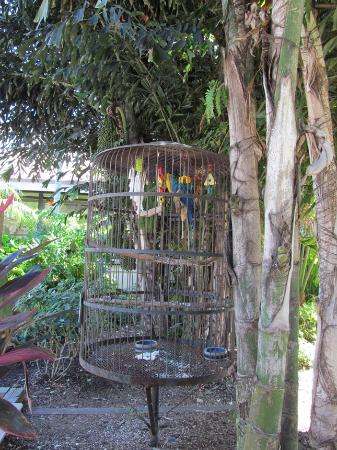 Jerry's Foods : Birds in Jerry's courtyard