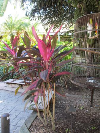 Jerry's Foods : Plants in the courtyard