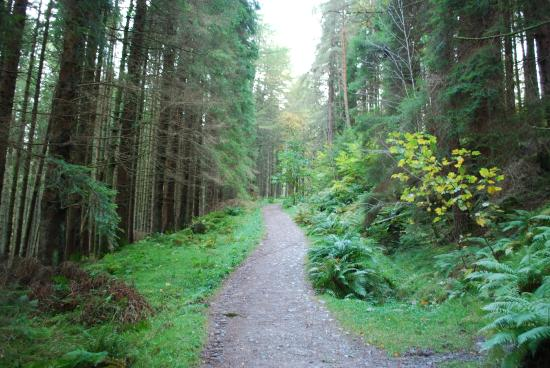 Callander - Balquhidder Trail : On the way to the top of hill