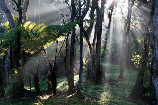 Hale Ohia Cottages: Early morning walk around the grounds.