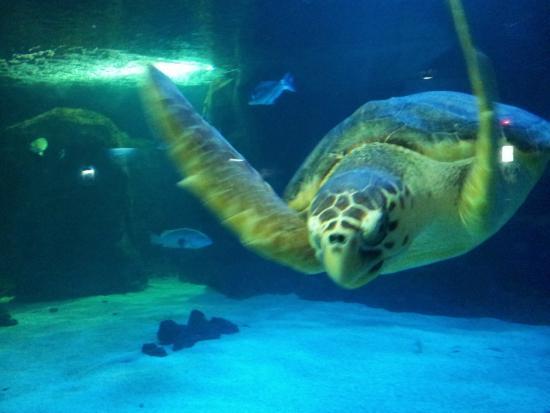 jolie tortue picture of lanzarote aquarium costa On aquarium lanzarote precio