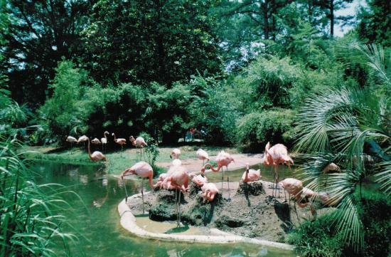 Sleeping Picture Of Riverbanks Zoo And Botanical Garden Columbia Tripadvisor