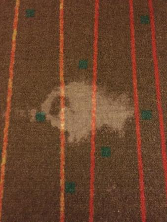 CoCo Key Water Resort Hotel & Convention Center - Waterbury: Stain on carpet (one of hundreds)
