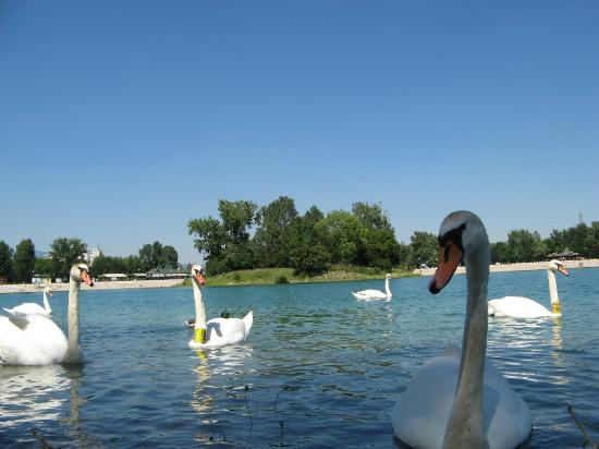 Jarun lake