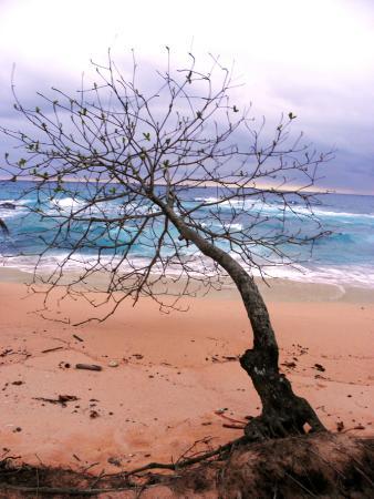 Praia Jale: The beach