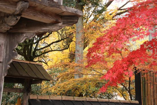Kyushu, Japón: ใบไม้เปลี่ยนสีก่อนเข้าฤดูหนาว