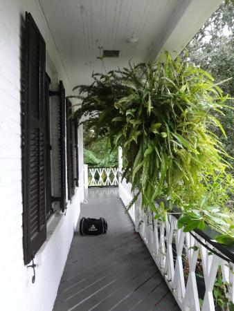 Grand Bayou Noir : Lush ferns on the way to the suite.