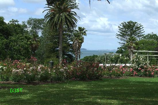 Parnell Rose Gardens: beautiful scenery
