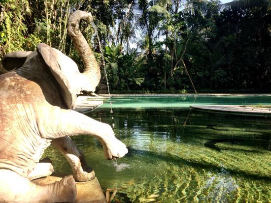 Jiwa Damai Organic Garden & Retreat: Pool area
