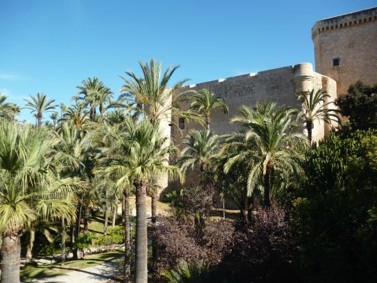 вид на Parque Municipal - Foto di Palm Groves (Palmeral) of Elche, Elche - Tr...