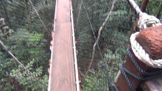 Canopy Walk: Walkway
