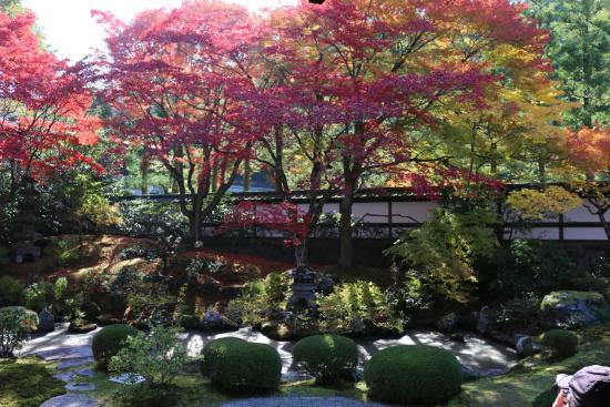 Sennyuji Temple: お庭で見れる紅葉です