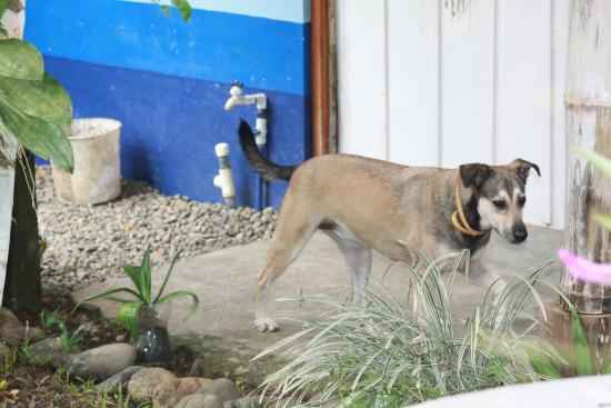Hotel Los Suenos : les gentils gardiens