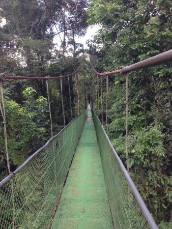 Refugio de Vida Silvestre Bosque Alegre : puentes colgantes