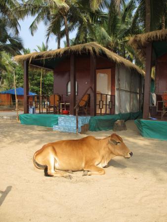 Om Sai Beach Huts: Full sea view hut