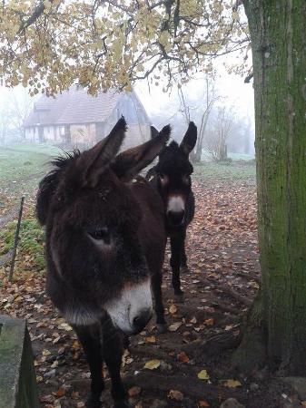 Git'Ane Evasion: Les ânes