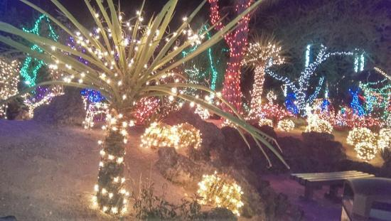 Cacti garden lit up for Christmas - Picture of Ethel M Chocolates ...