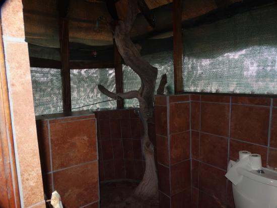 De badkamer geheel in steil bild von elephant sands botswana