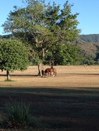 House of Jasmines - Estancia de Charme: Horses live and graze on the property