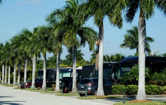 Naples Motorcoach Resort: Class A coaches all lined up.
