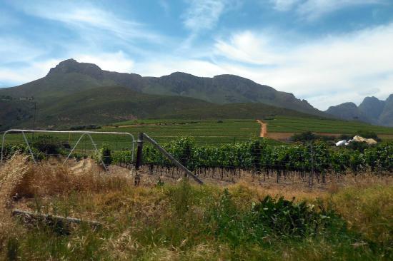 Wine Escapes - Exclusive Cellar & Vineyard Tours : Stellenbosch Mountains