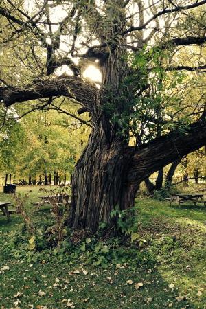 Parc Des Iles de Boucherville : Magnifiques arbres