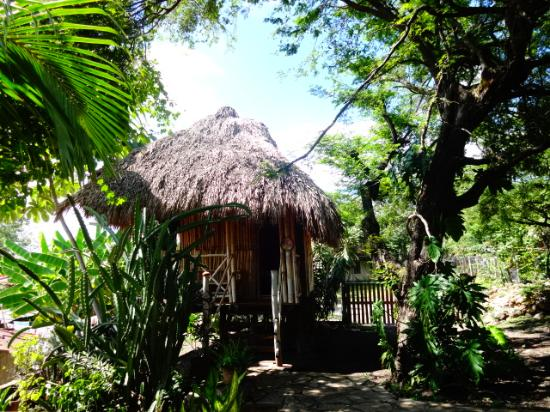Hostal Barca de Oro: Our treehouse