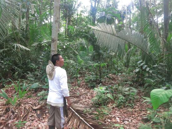 Tarzan Amazon Tours